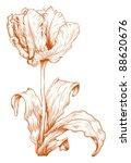 vector tulip in vintage...