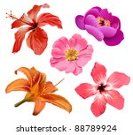 Stock vector tropic flowers vector hawaiian hibiscus and exotic aloha plants isolated illustration 88789924