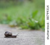 Snail on green foliage background - stock photo