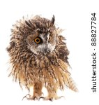 Stock photo long eared owl isolated on white background 88827784