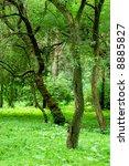 green forest | Shutterstock . vector #8885827