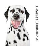 Portrait Of A Smiling Dalmatian ...