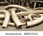 A Pile Of Old  Ivory Tusks