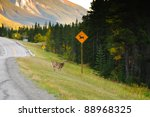 Deer Crossing On The Side Of A...