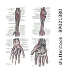 4 views of the human hand and... | Shutterstock . vector #89021380