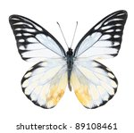 Stock photo white and black butterfly on isolated white background 89108461