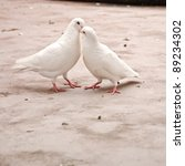 two loving white pigeons - stock photo