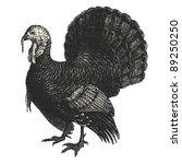 turkey   vintage engraved... | Shutterstock .eps vector #89250250