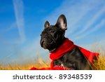 Stock photo cute french bulldog puppy playing 89348539