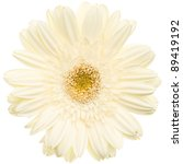 White Daisy Flower Isolated On...