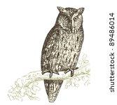 Vulture  Vintage Engraved...