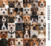 Stock photo collage of dog heads 89532073
