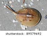 Horseshoe Crab On A White Sand...
