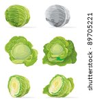 collection of cabbage  vector   Shutterstock .eps vector #89705221