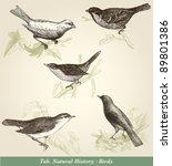 Birds   Vintage Engraved...