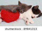 Stock photo two likable kittens sleep together 89841313