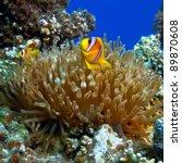 Underwater Photo Coral Garden...