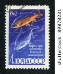 Small photo of USSR - CIRCA 1962: A Stamp printed in USSR shows a Common carp and Common bream (Cyprinus carpio and Abramis brama), series, circa 1962