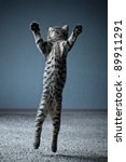 Stock photo little kitten jumping with widely spread paws 89911291