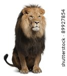 lion  panthera leo  8 years old ... | Shutterstock . vector #89927854