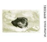 Toad   Vintage Engraved...