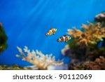 Clown Fish In The  Blue Aquarium