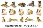 Stock photo collection animals the white backgrounds 90115627