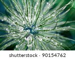 Macro shot of flower head in morning dew. Space colors. - stock photo