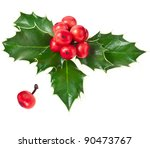 Sprig Of European Holly Ilex...