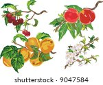 illustration with ripe peach ... | Shutterstock . vector #9047584