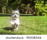 Happy dog with floppy ears running fast - stock photo