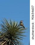 Desert Wren On Cactus Tree
