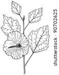 Plant Hibiscus Syriacus  Rose...