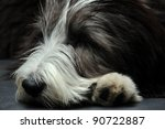 Closeup Of A Bearded Collie...