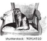 Cat Sitting On Chair   Vintage...