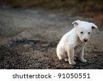 Sad Puppy On The Street