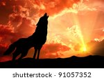 Lone Wolf Howling At The Sunset