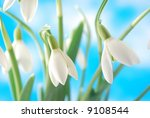 Close-up of white snowdrop against blue sky with clouds - stock photo