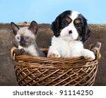 Stock photo puppy and kitten 91114250