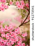 Pink Azalea Bush In The Spring