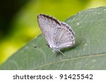 Small photo of Summer Azure Butterfly, Celastrina ladon neglecta, perched on green leaf