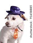 chihuahua in halloween costume | Shutterstock . vector #91658885
