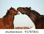 two brown horses playing with... | Shutterstock . vector #91787831