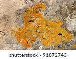 Yellowish Lichens Growing On...
