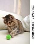 Stock photo playing cat 91983461