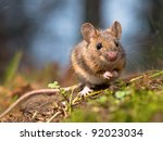 Wild wood mouse sitting on the forest floor - stock photo