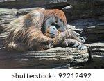 monkey | Shutterstock . vector #92212492