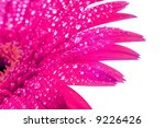 wet flower leafs | Shutterstock . vector #9226426