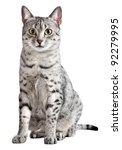 spotted egyptian mau cat... | Shutterstock . vector #92279995