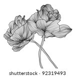 hand drawn decorative roses for ... | Shutterstock .eps vector #92319493